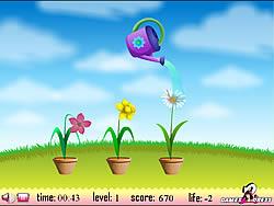 Flower Watering